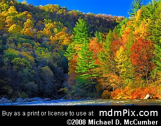 Eastern White Pine at Ohiopyle State Park, Pennsylvania picture 094 - October 21, 2006