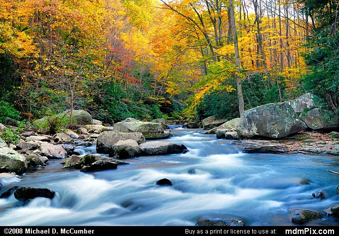 Yellow Fall Foliage and Flowing Meadow Run