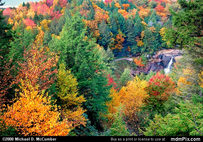 Red Spruce picture with Blackwater Canyon, Gentle Trail Overlook, Blackwater River, and Blackwater Falls from Blackwater Falls State Park, WV taken on October 8, 2008.