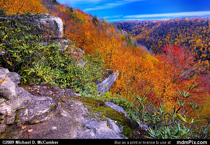 Canyon of Golden Fall Color Beyond Pase Point Overlook