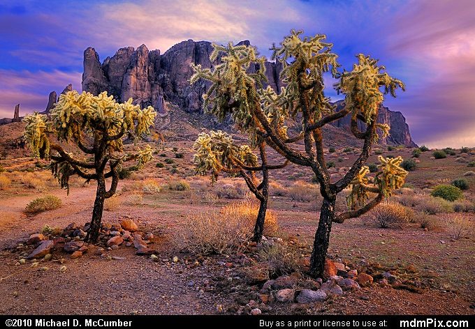 Silver Chollas Seemingly Dance before Superstition Mountain