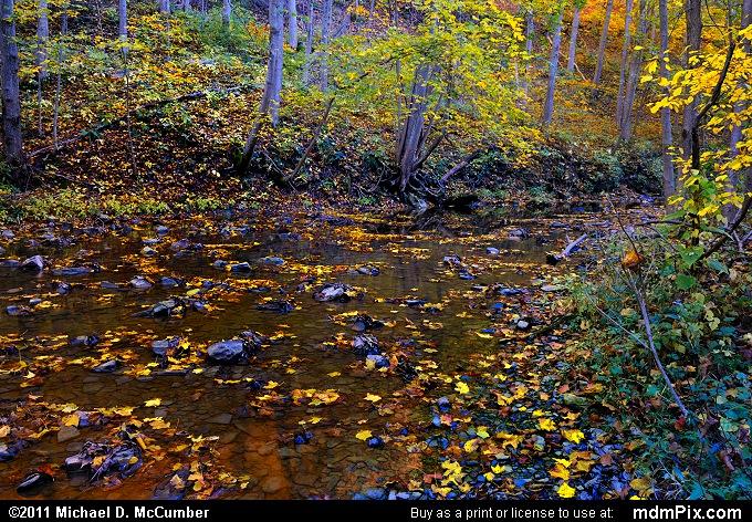Cedar Creek Picture 010 October 12 2010 From Cedar