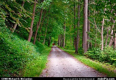 Pristine Forest along Great Allegheny Passage Trail