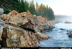 Foggy Acadia Coastline with White Spruce & Granite