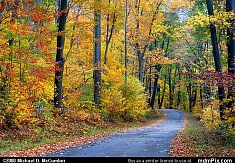 Laurel Summit Road Fall Foliage