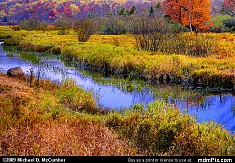 Canaan Valley Bog with Blackwater River in Autumn