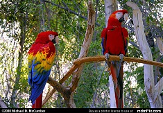 Parrots at the Phoenix Zoo