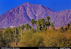 Camelback Mountain and Palm Trees from Papago