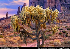 Silver Cholla Cactus below Superstition Mountain