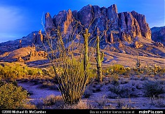 Ocotillo Branches with Superstition Mountain at Sunset