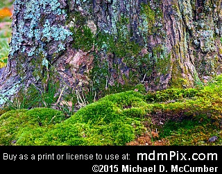 Moss (Plants) picture