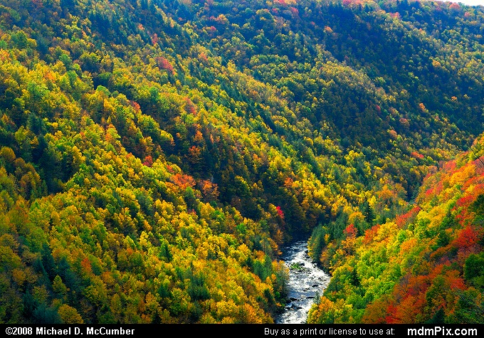 Blackwater Canyon WV Fall Foliage