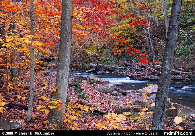 Dunbar Creek (Dunbar Creek Picture 006 - October 25, 2006 from PA State Game Land 51)