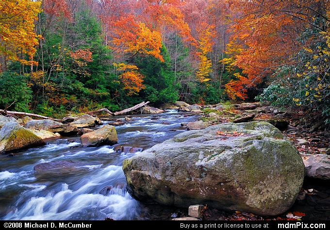 Autumn Color along Ohiopyle's Meadow Run