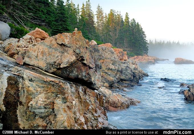 Foggy Acadia Coastline with White Spruce & Granite