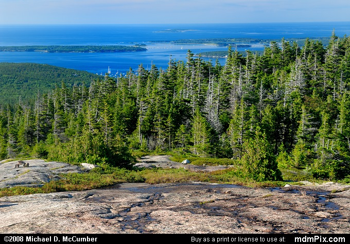 Spruce Forest and Atlantic Ocean View on Pemetic Mountain