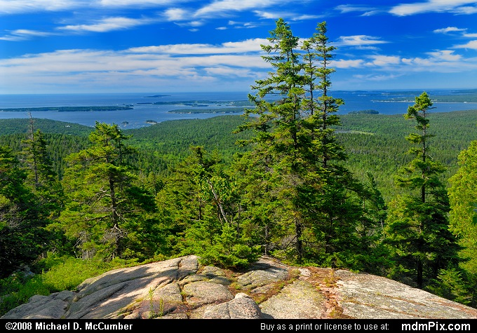 Red Spruce (Red Spruce Picture 054 - July 30, 2008 from Acadia National Park, Maine)