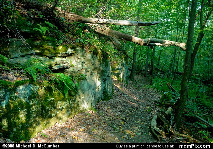Laurel Highlands Trail (Laurel Highlands Trail Picture 002 - September 20, 2008 from PA State Game Land 111)
