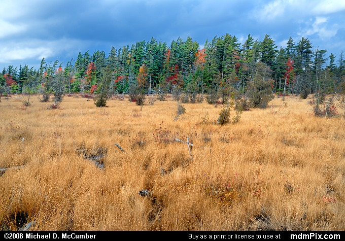 Spruce Flats Bog (Spruce Flats Bog Picture 067 - October 15, 2008 from Cook Township, Pennsylvania)