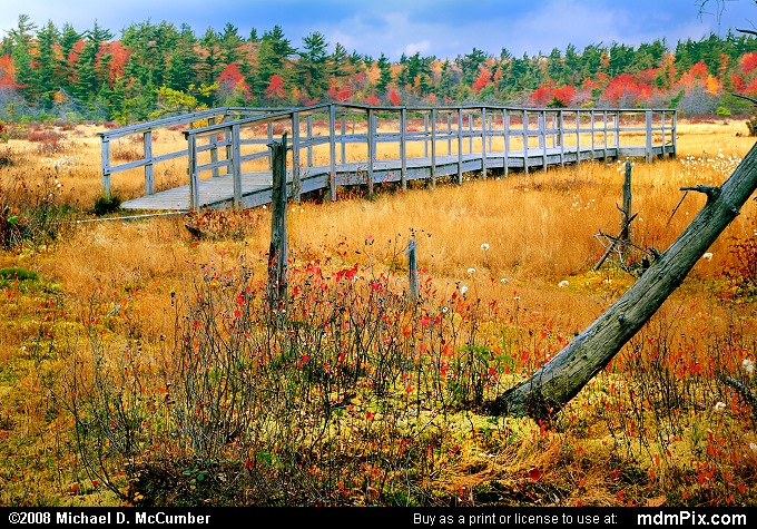 Spruce Flats Bog (Spruce Flats Bog Picture 068 - October 15, 2008 from Cook Township, Pennsylvania)