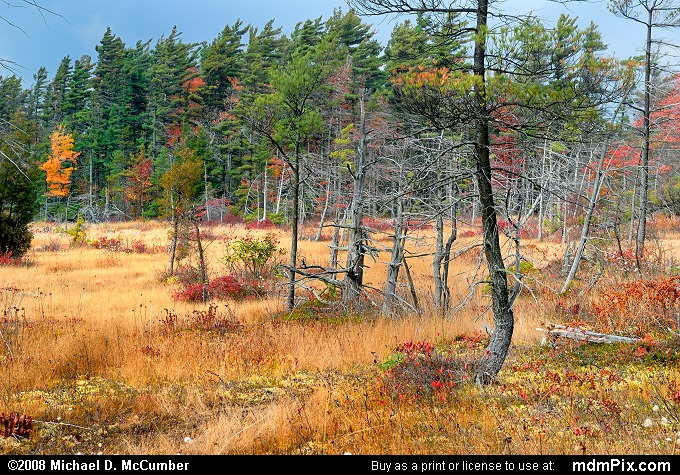 Spruce Flats Bog (Spruce Flats Bog Picture 070 - October 15, 2008 from Cook Township, Pennsylvania)