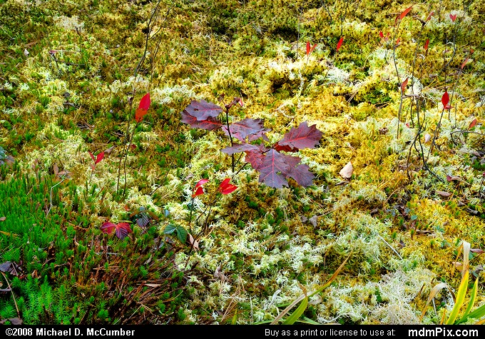 Spruce Flats Bog (Spruce Flats Bog Picture 076 - October 15, 2008 from Cook Township, Pennsylvania)