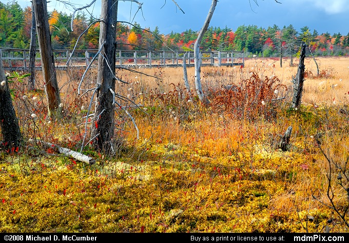 Spruce Flats Bog (Spruce Flats Bog Picture 077 - October 15, 2008 from Cook Township, Pennsylvania)