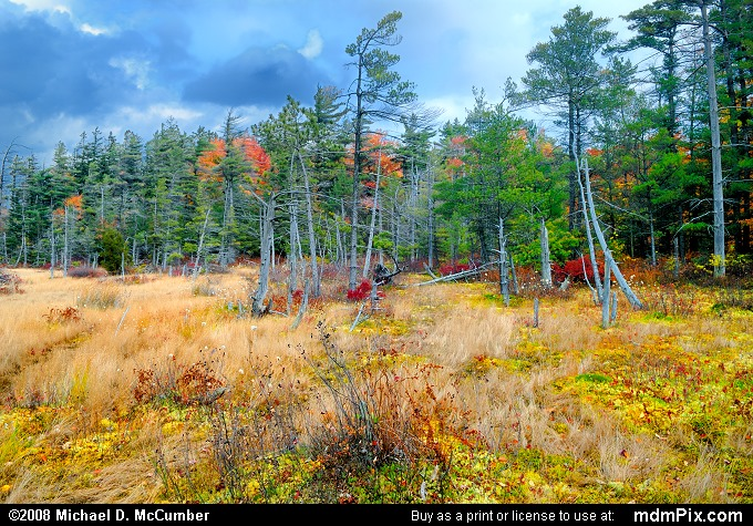 Spruce Flats Bog (Spruce Flats Bog Picture 078 - October 15, 2008 from Cook Township, Pennsylvania)