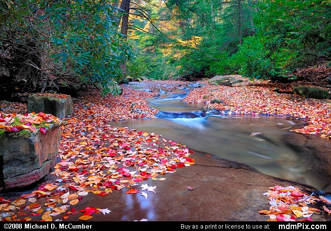 Linn Run and Fallen Autumn Leaves