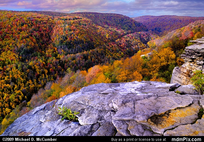 Fall Foliage Scarring West Virginia Mountains