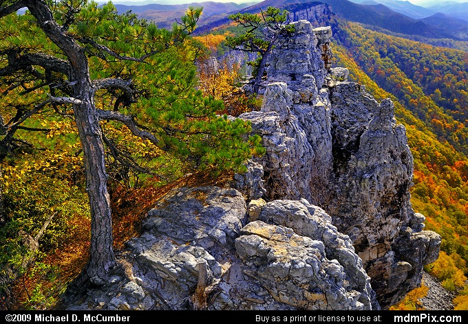 Red Pine (Red Pine Picture 049 - October 13, 2009 from Spruce Knob/Seneca Rocks National Recreation Area)
