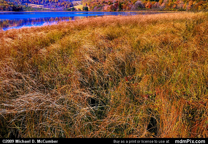 Cranberry Glade Lake (Cranberry Glade Lake Picture 041 - October 21, 2009 from PA State Game Land 111)