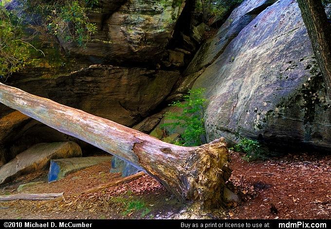Dead Tree Leaning Against Cooper Rocks