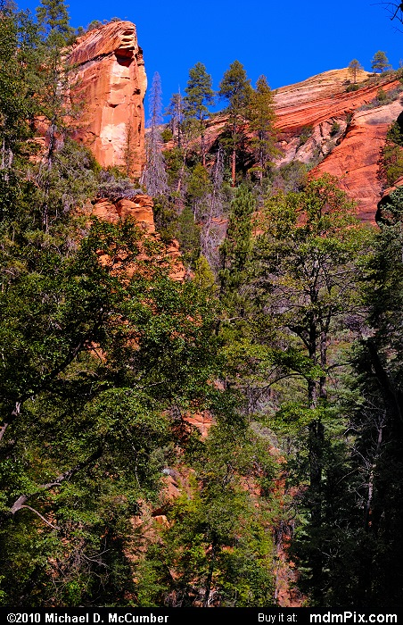 West Fork of Oak Creek Canyon (West Fork of Oak Creek Canyon Picture 054 - September 21, 2010 from Red Rock Secret Mountain Wilderness, Arizona)