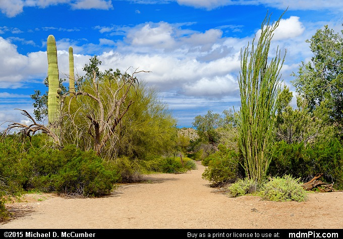 Sandy Desert Wash (Sandy Desert Wash Picture 022 - February 22, 2015 from San Tan Mountain Regional Park, Arizona)
