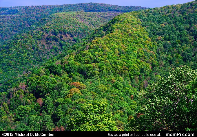 Laurel Ridge (Laurel Ridge Picture 006 - May 14, 2015 from Ohiopyle State Park, Pennsylvania)