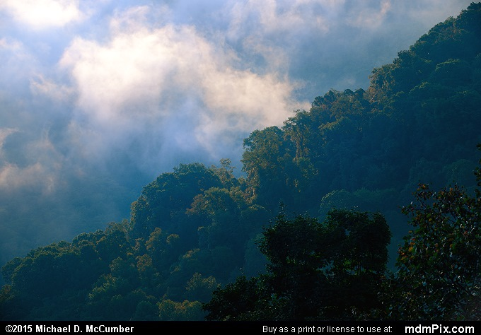 Fog (Fog Picture 022 - September 19, 2015 from Ohiopyle State Park, Pennsylvania)
