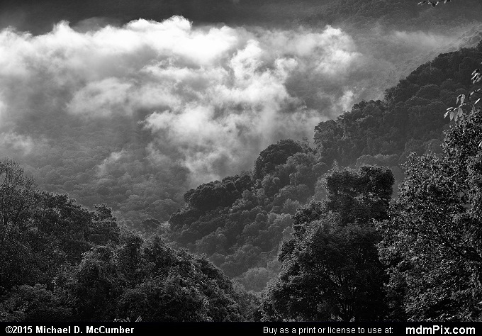 Baughman Rock Overlook (Baughman Rock Overlook Black and White Picture 026 - September 19, 2015 from Ohiopyle State Park, Pennsylvania)