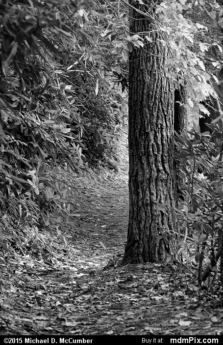 Ferncliff Trail (Ferncliff Trail Black and White Picture 058 - October 8, 2015 from Ohiopyle State Park, Pennsylvania)