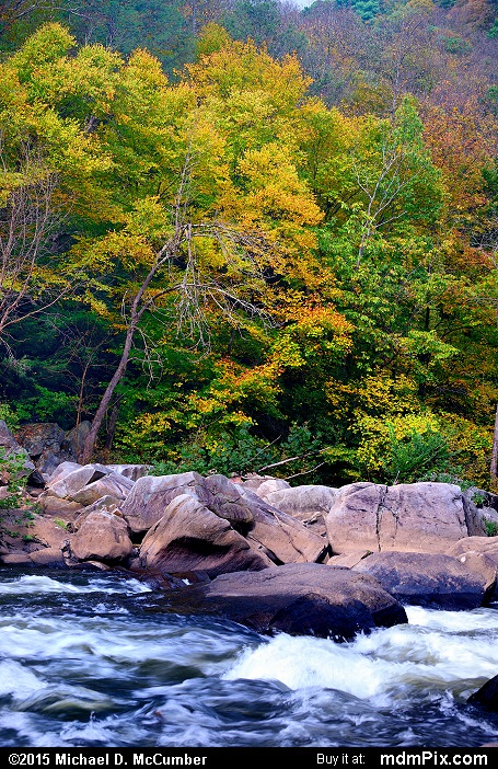Youghiogheny River (Youghiogheny River Picture 064 - October 8, 2015 from Ohiopyle State Park, Pennsylvania)