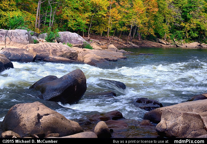 Youghiogheny River's Entrance Rapid in Early Autumn