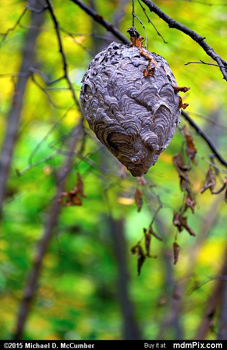 Beehive (Beehive Picture 085 - October 8, 2015 from Ohiopyle State Park, Pennsylvania)