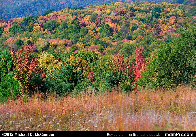 Oak-Hickory Forest (Oak-Hickory Forest Picture 094 - October 8, 2015 from PA State Game Land 51)
