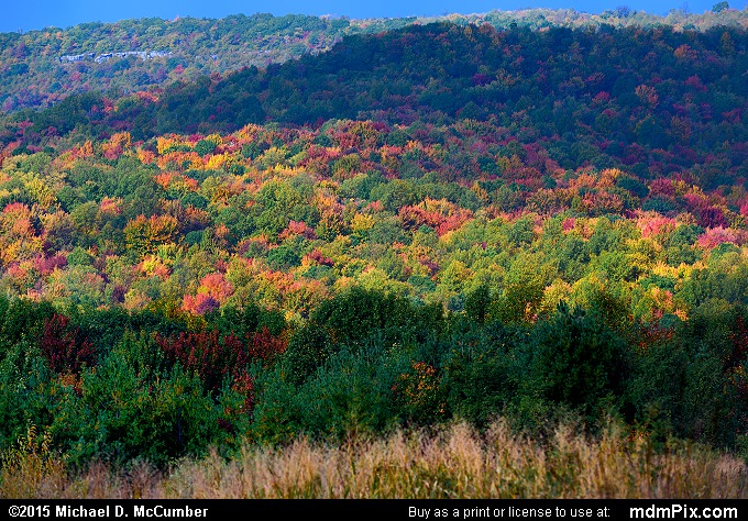 Oak-Hickory Forest (Oak-Hickory Forest Picture 096 - October 8, 2015 from PA State Game Land 51)