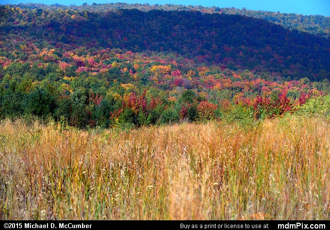 Chestnut Ridge (Chestnut Ridge Picture 097 - October 8, 2015 from PA State Game Land 51)