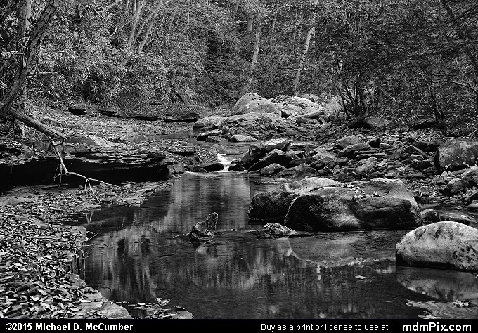 Dunbar Creek (Dunbar Creek Black and White Picture 105 - October 8, 2015 from PA State Game Land 51)