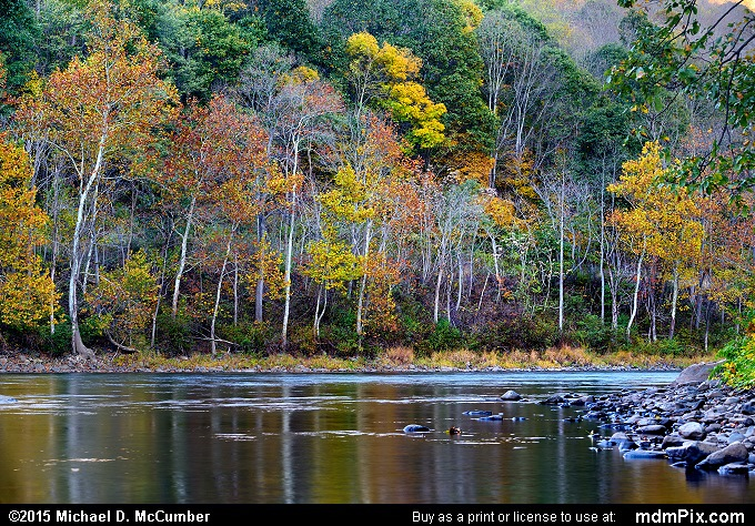 Youghiogheny River (Youghiogheny River Picture 017 - October 21, 2015 from Dunbar Township, Pennsylvania)
