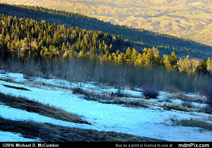 Spruce-Fir Forest (Spruce-Fir Forest Picture 003 - March 16, 2016 from Cedar Crest, New Mexico)