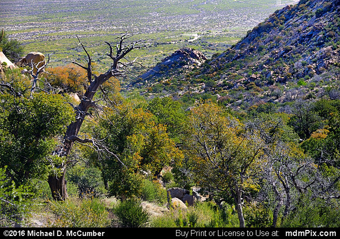 Pine Tree Trail (Pine Tree Trail Picture 006 - March 25, 2016 from Organ Mountains-Desert Peaks National Monument, New Mexico)