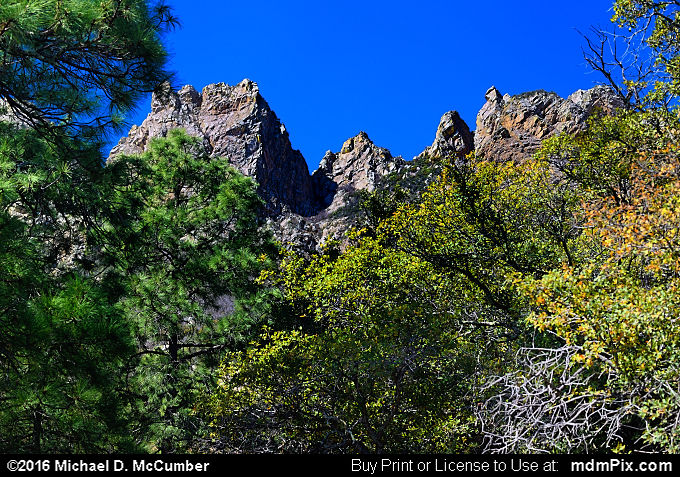 Pine Tree Trail (Pine Tree Trail Picture 012 - March 25, 2016 from Organ Mountains-Desert Peaks National Monument, New Mexico)